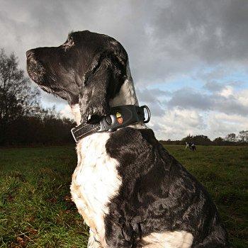 Accessoires de mode pour chiens, pour ou contre ?  - Page 6 78459710