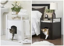 Chat et chien et petit logis Chat-c11
