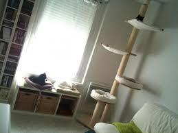Chat et chien et petit logis Chat110