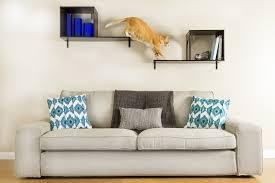 Chat et chien et petit logis Chat310
