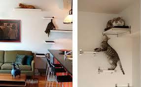 Chat et chien et petit logis Chats10