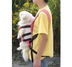 Accessoires de mode pour chiens, pour ou contre ?  - Page 6 Chien10
