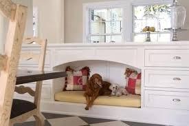 Chat et chien et petit logis Chien210