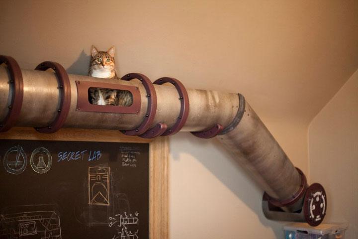 Chat et chien et petit logis Coucou10