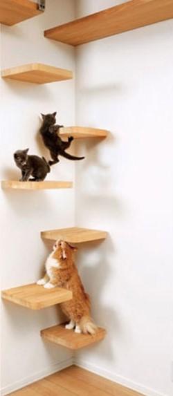 Chat et chien et petit logis Coucou11