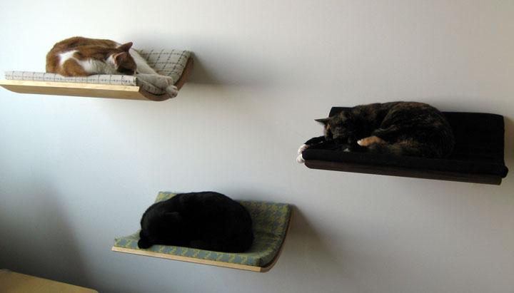 Chat et chien et petit logis Coucou12