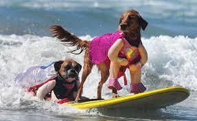 Accessoires de mode pour chiens, pour ou contre ?  - Page 6 Images17