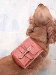 Accessoires de mode pour chiens, pour ou contre ?  - Page 6 Images19