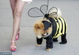 Accessoires de mode pour chiens, pour ou contre ?  - Page 7 Images38