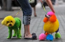 Accessoires de mode pour chiens, pour ou contre ?  - Page 7 Images39