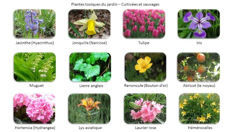 Fido au jardin - Plantes toxiques cultivées et sauvages Jardin10
