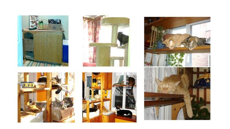 Chat et chien et petit logis Place10