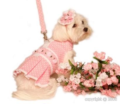 Accessoires de mode pour chiens, pour ou contre ?  - Page 6 Titre10