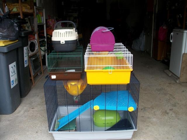 Cage type Jenny petites cages et cage de transport 77 Imgp0610
