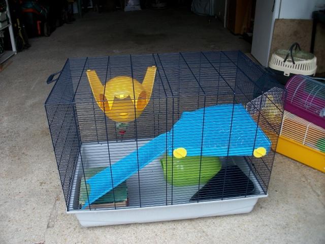 Cage type Jenny petites cages et cage de transport 77 Imgp0611