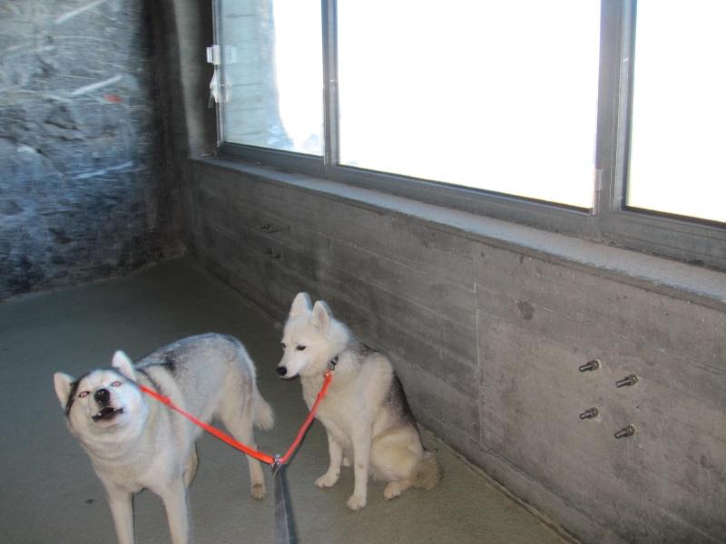 Saskia et Jiro, suite 1230
