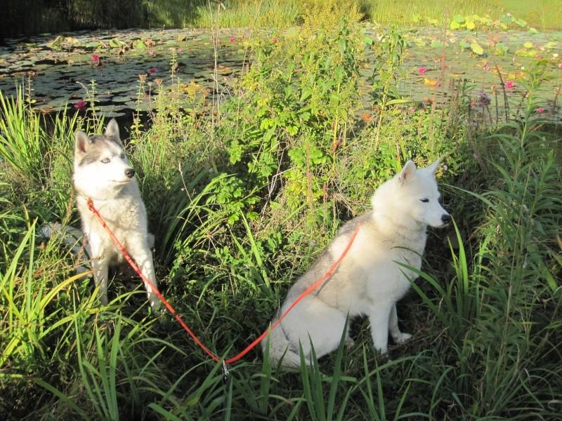 Saskia et Jiro, suite 138