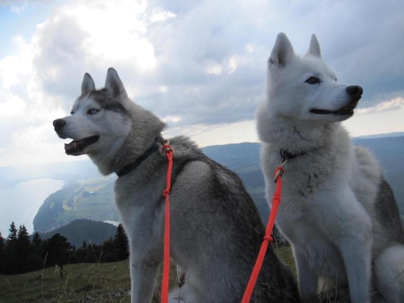 Saskia et Jiro, suite 3615