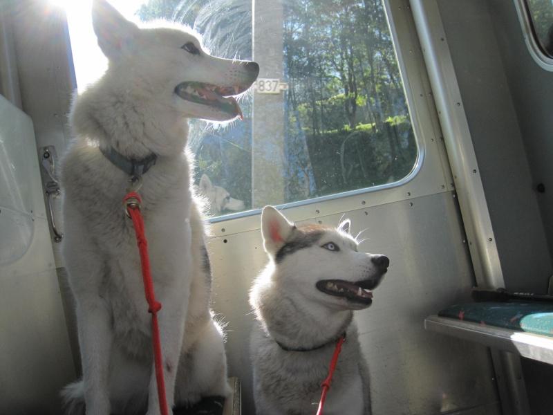 Saskia et Jiro, suite 536