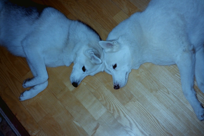 Saskia et Jiro, résumé parties 1 et 2 Pict0112