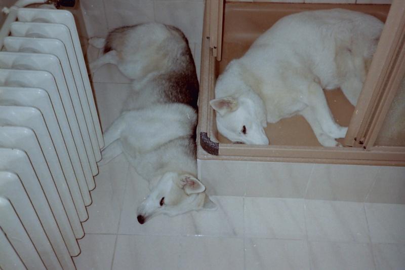 Saskia et Jiro, résumé parties 1 et 2 Pict0113