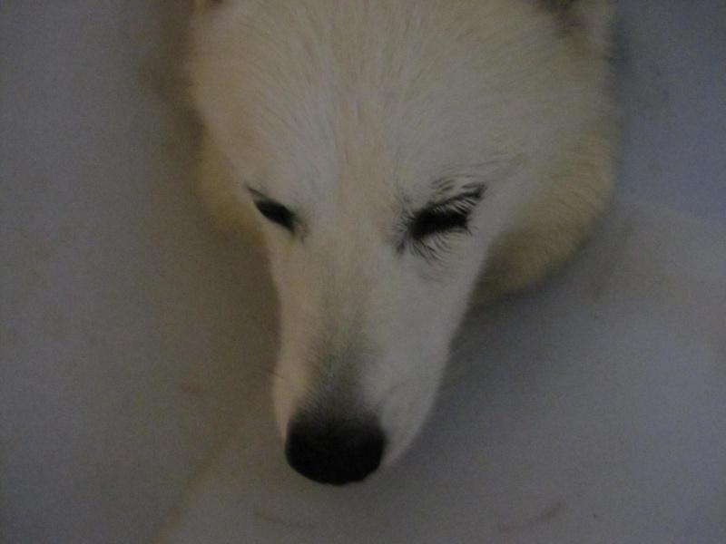 Saskia a été opérée d'une verrue sur une paupière Saskia11