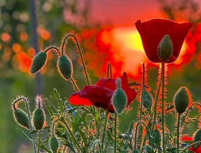 JadOre cette fleur  93118410