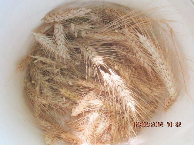 comment créer un verger à partir de graines,  noyaux,  pepins... Photo_27