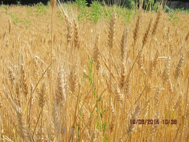 comment créer un verger à partir de graines,  noyaux,  pepins... Photo_28