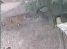 Wildtier-Livecams - Seite 2 3_10_111