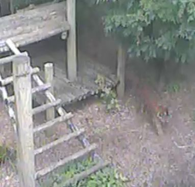 Wildtier-Livecams - Seite 2 3_10_112