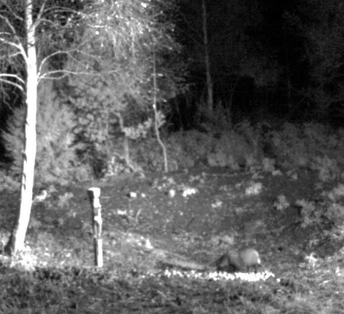 Wildtier-Livecams Besuch10