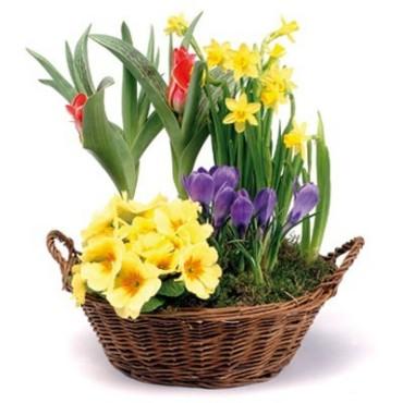 Herzlichen Glückwunsch Blumen10