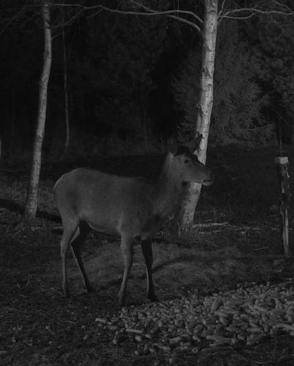Wildtier-Livecams - Seite 6 Einsam10