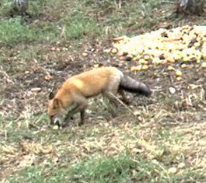 Wildtier-Livecams - Seite 3 Es_ist10