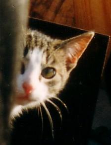 Miau... Nachba10