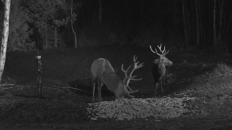 Wildtier-Livecams - Seite 6 Nachtm10
