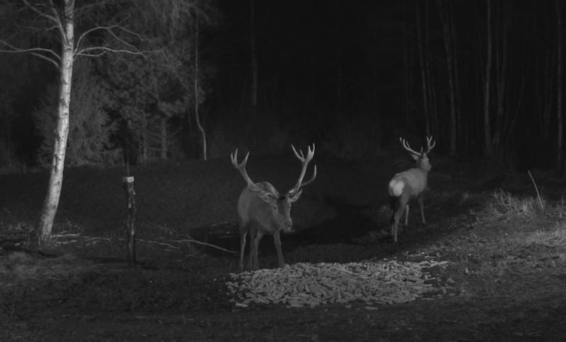 Wildtier-Livecams - Seite 6 Nachtm11