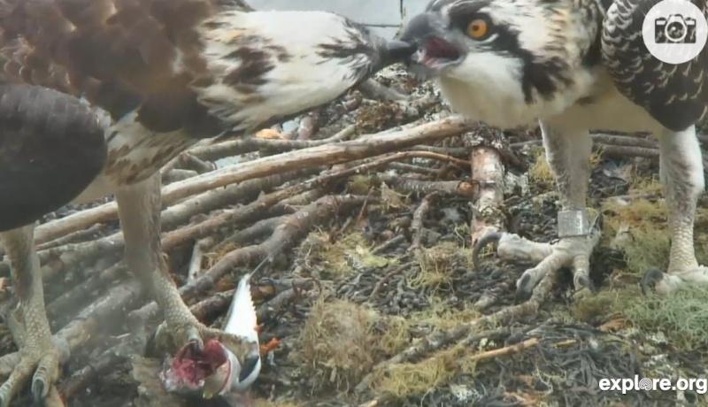 Wildtier-Livecams - Seite 38 Nicht_10