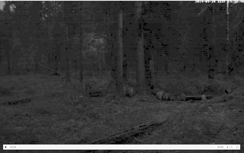 Wildtier-Livecams Wutz2110