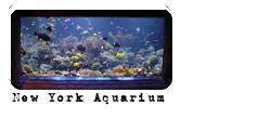 Foro gratis : Angels Life Aquari10
