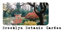 Foro gratis : Angels Life Botani10