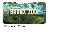 Foro gratis : Angels Life Zoo10
