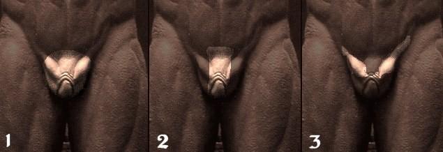 ¿Homosexualidad yautja? Organo10