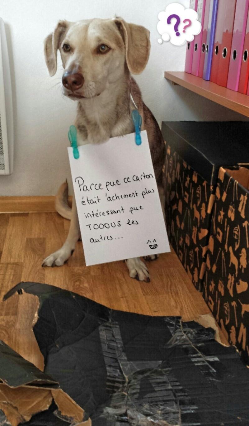 Dog Shaming.com: les chiens de la honte 2014-010