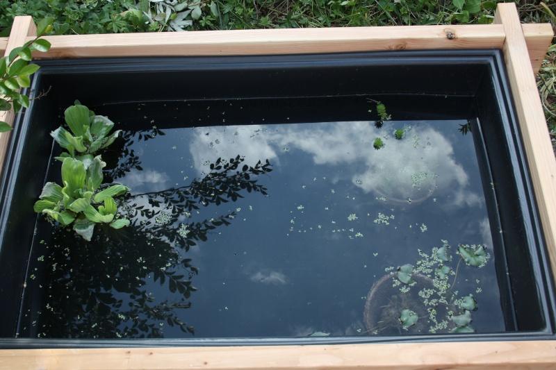 Mon petit bassin à betta Img_0812