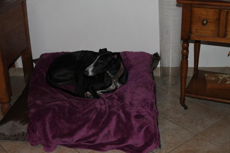 Niza galga à l'adoption SoliGalgos. Adoptée ! - Page 4 10633410