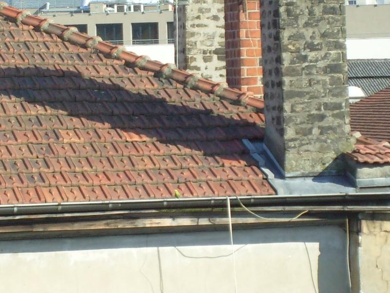 Alerte évasion sur Lyon : l'été s'annonce chaud... S7303019