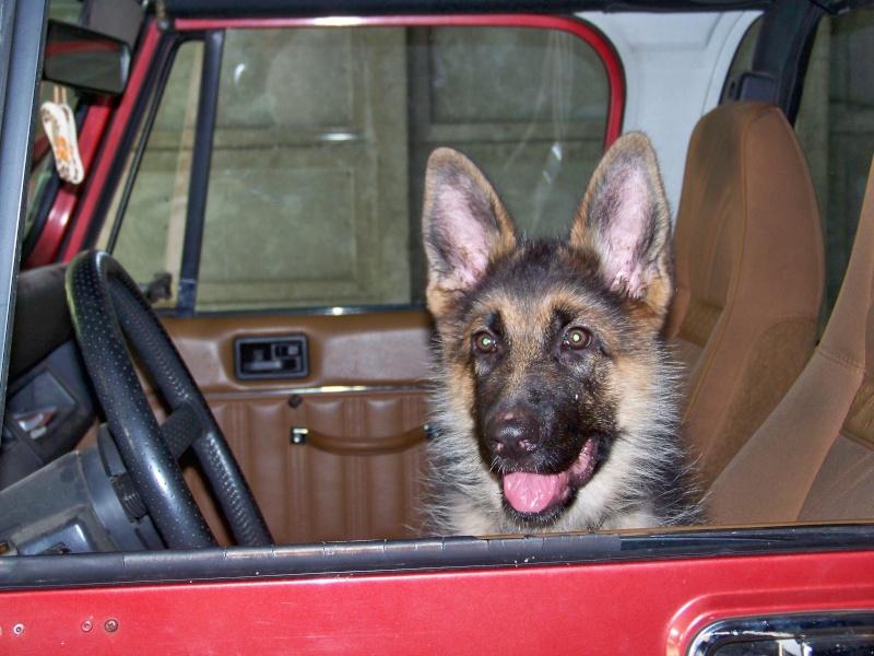 nouveau gardien de ma jeep 100_2910