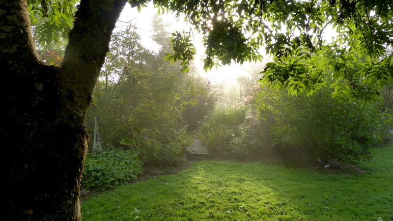 Le jardin de Cassandra - Page 2 P1320543